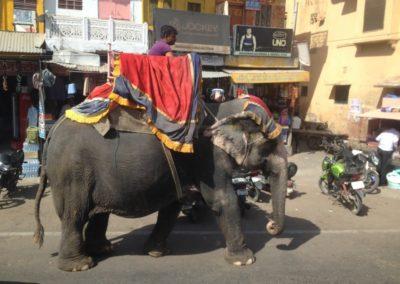 elephant Jaipur Broceliande Lycee voyage echange Inde 9